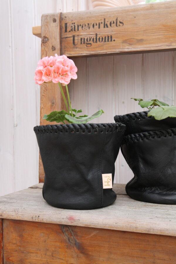 Krukpåse Pelargonium